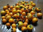 柿酢作り1